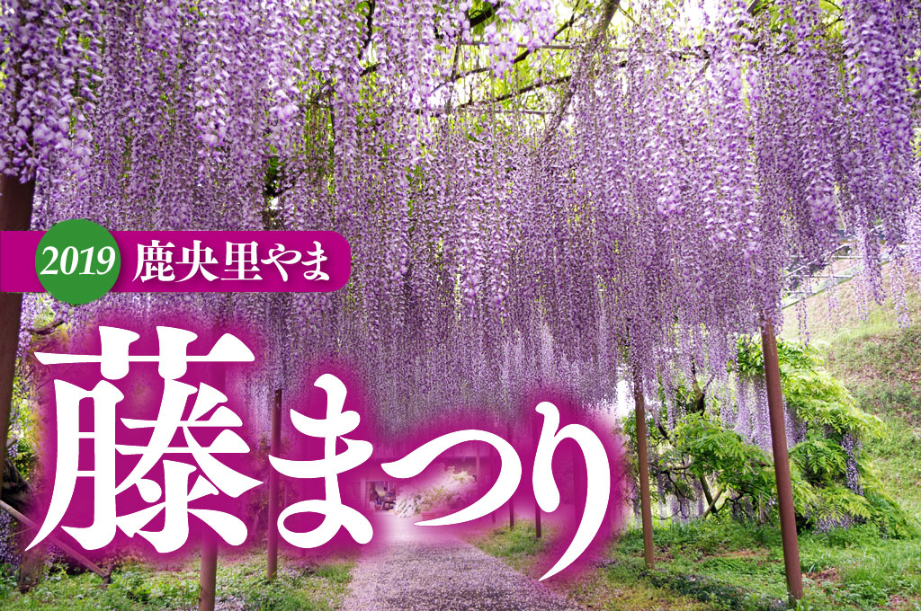 【藤の花ロケ撮影】鹿央町古代の森公園のイメージ